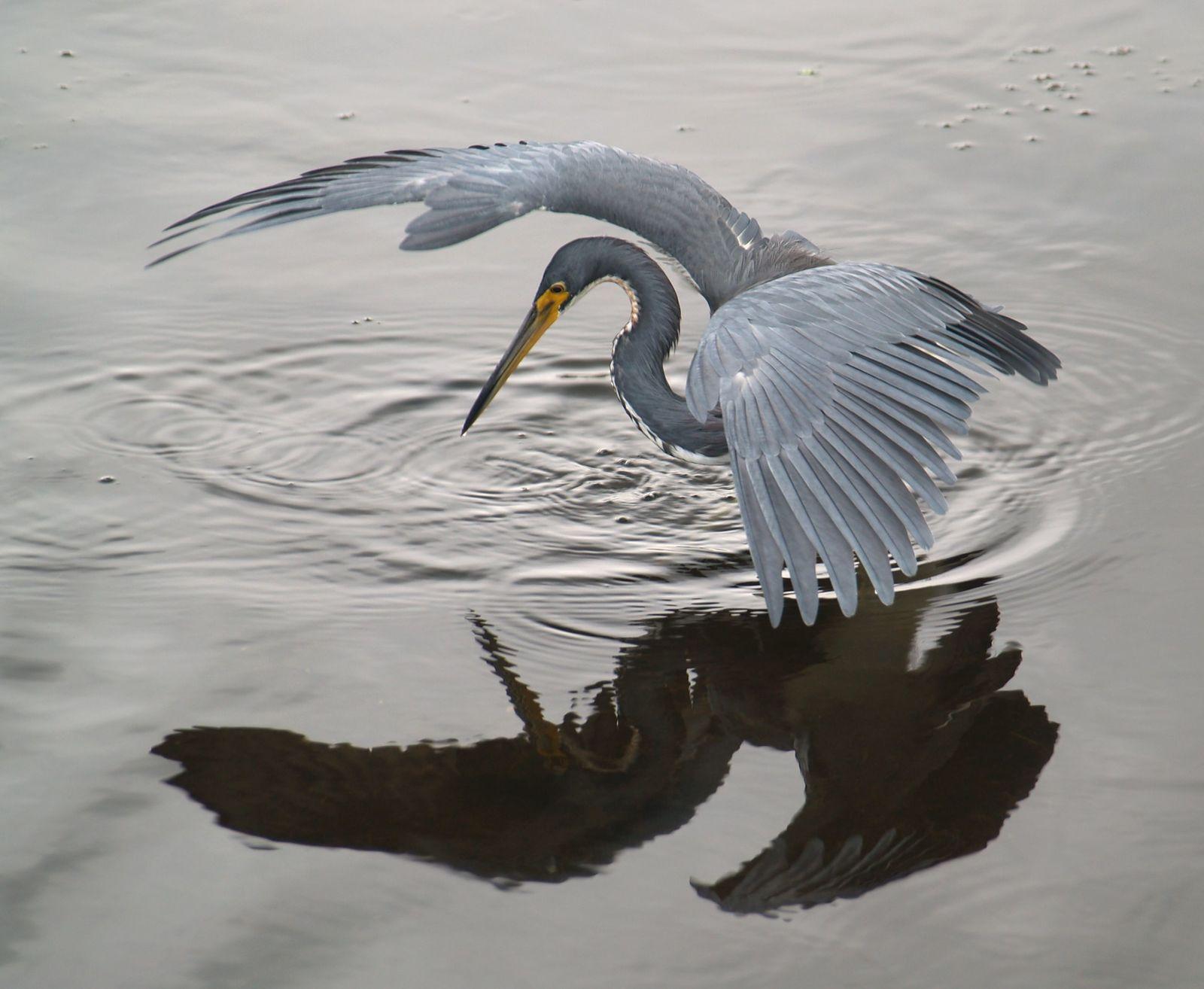 اجابة سؤال كلمة السر هي من الطيور مكونة من 10 حروف منتديات