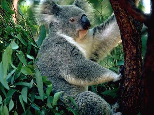حل لغز ما هو الحيوان الذي عينه اكبر من دماغه منتديات حب