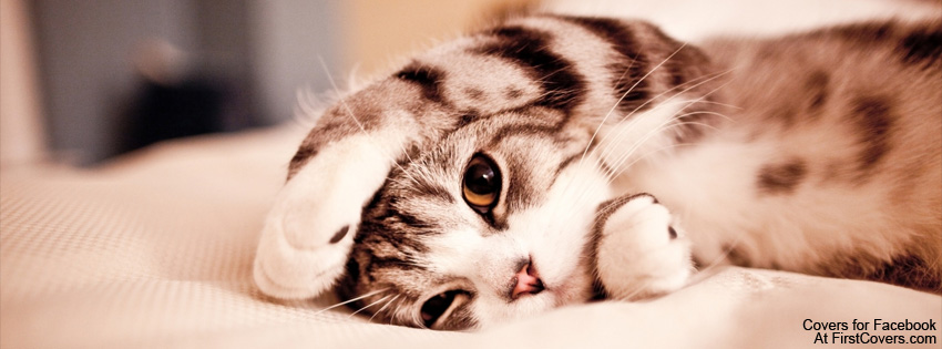 Cute-Kitten-Facebook-Cover.jpg