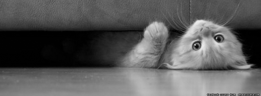 1845-couch-cat-facebook-cover.jpg