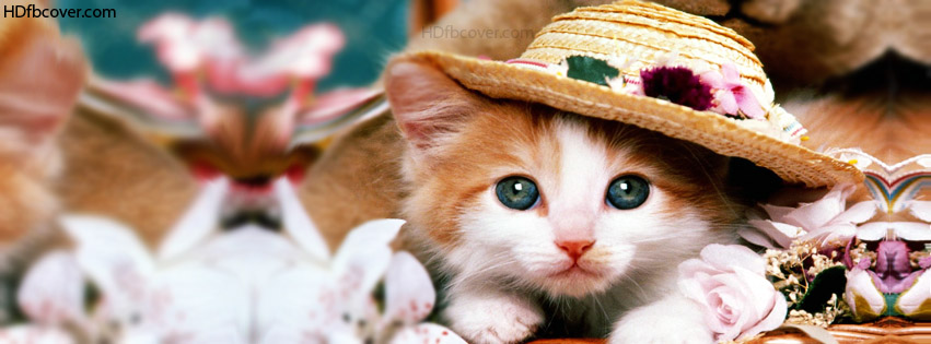 Cute-cat-facebook-cover.jpg