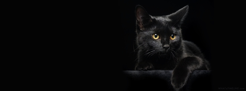 black-cat-facebook-cover.jpg