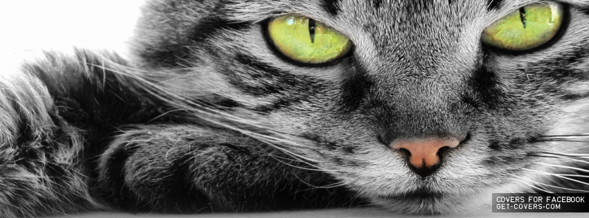 Cat-Green-Eyes-Cover.jpg