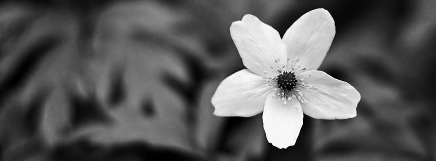 black_white_flower_cover_18.jpg