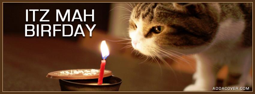3000-birthday-cat.jpg