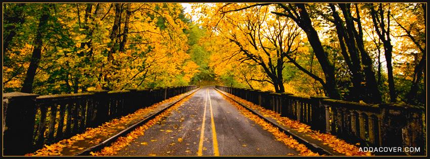 2469-autumn-road.jpg