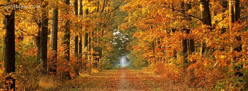 autumn_road_facebook_cover.jpg