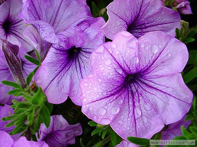 photolovegirl.com1370787004065.jpg