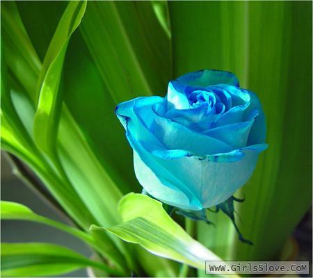 photolovegirl.com137078700392.jpg