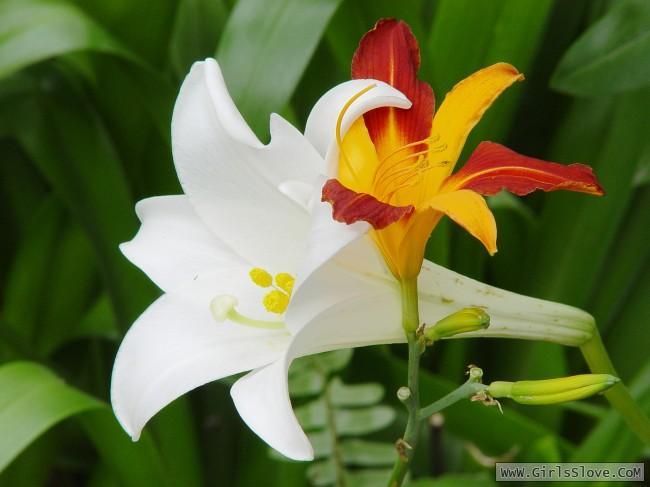photolovegirl.com1370787004014.jpg