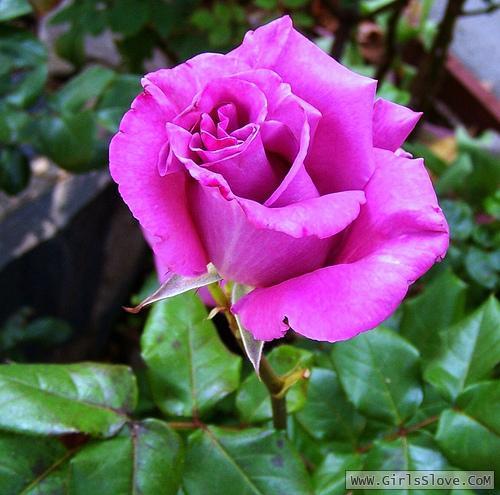 photolovegirl.com1370787004289.jpg