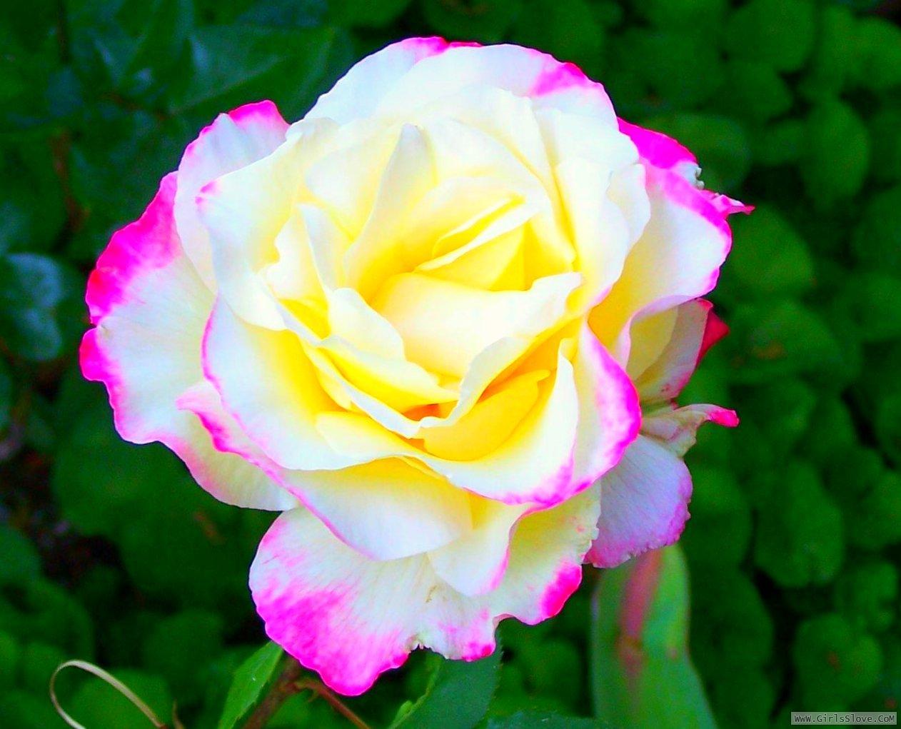 photolovegirl.com13707870043410.jpg